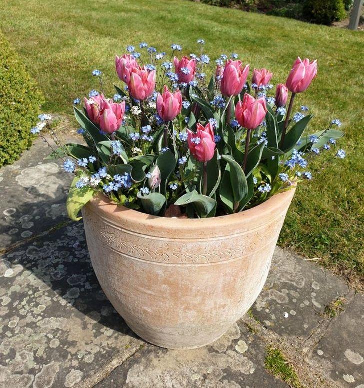 Vazoja-ime-e-preferuar-e-tulipanëve-këtë-vit